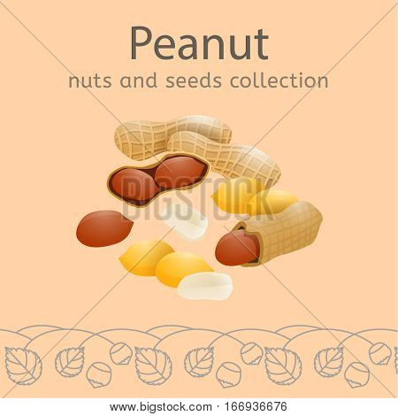 Peanuts on a light beige background. Nuts and seeds collection. Vector illustration.