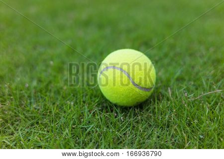 Tennis ball on green grass leaf background