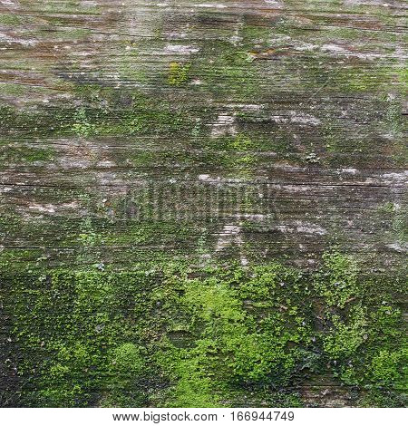 Wooden board covered by moss and mildew