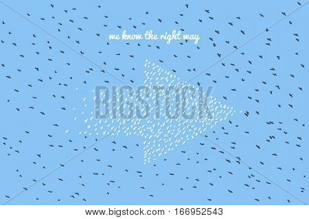 Huge amount of birds forming arrow - vector birds silhouettes isolated