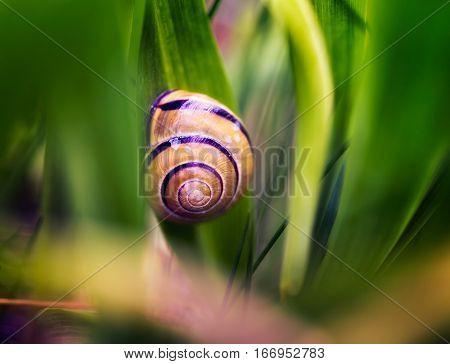 Snail Shell In Grass