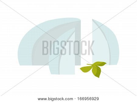 Sliced on pieces feta cheese with herbs branch. Flat design vector. Fresh dairy product. Natural and healthy nutrition. For food concept, diet infographic, milk production ad. Isolated on white