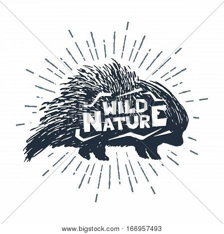 Hand drawn label with textured porcupine vector illustration and
