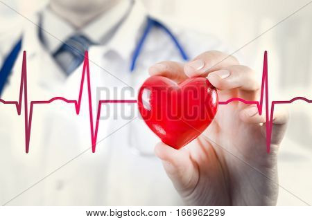 Cardiologist Holding Heart 3D Model. Concept With Cardiogram