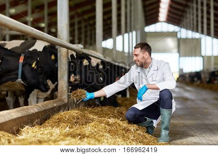 agriculture industry, farming, people and animal husbandry concept - veterinarian or doctor feeding cows in cowshed on dairy farm