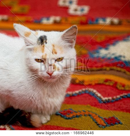Feline In Morocco Africa And Sweet Face