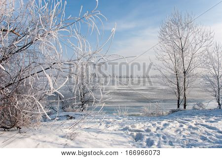 View on the Gulf Dog Arm through the bushes covered with hoarfrost, Kiev, Obolon, Ukraine