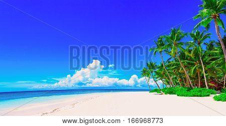Sea Sky Sun Tree