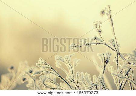 Frost on blade of grass. Beautiful winter seasonal natural background.