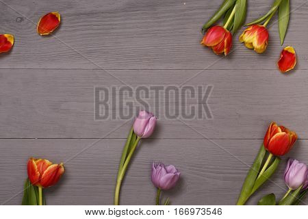 Lilac and red tulips in the lilac wooden table. Banner template layout mockup for Woman Day, Valentines Day and Teacher's Day. Photo for posts, blogs, advertising and news.