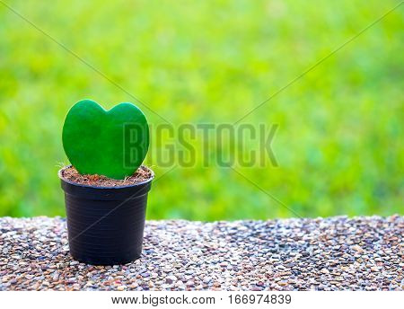Tree in the shape of heart valentines day background Greenery Tone 2017