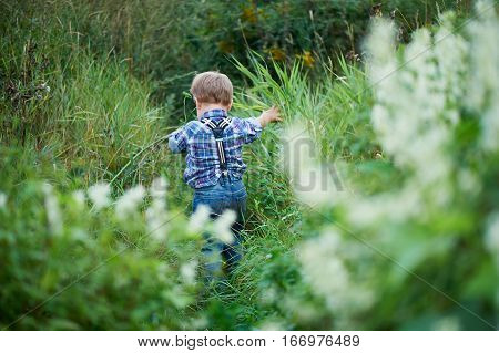 Little cute boy goes into a field of tall grass, stylish jeans with suspenders plaid shirt. Memories of childhood and carefree