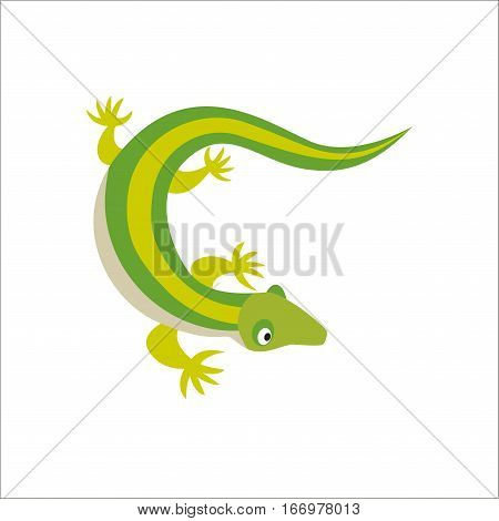 Chinese water dragon on white background. Lizard wild exotic vertebrate nature animal vector illustration. Salamander design cartoon gecko zoo reptile.