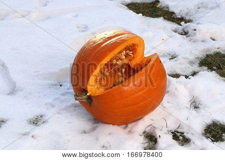 Pumkin / Cut pumpkin lying in the snow
