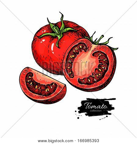 Tomato vector drawing. Isolated tomato and sliced piece. Vegetable artistic style illustration. Detailed vegetarian food sketch. Farm market product. Great for label, banner, poster