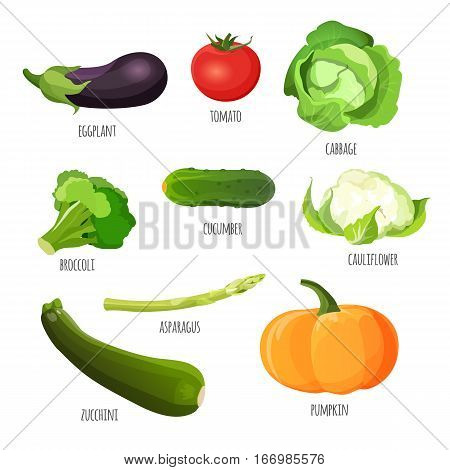 Set of vegetables. Vegetarian food vector illustration. Purple eggplant, red tomato, green cabbage, fresh broccoli, tasty cucumber, delicious cauliflower, pumpkin and zucchini near asparagus stem.