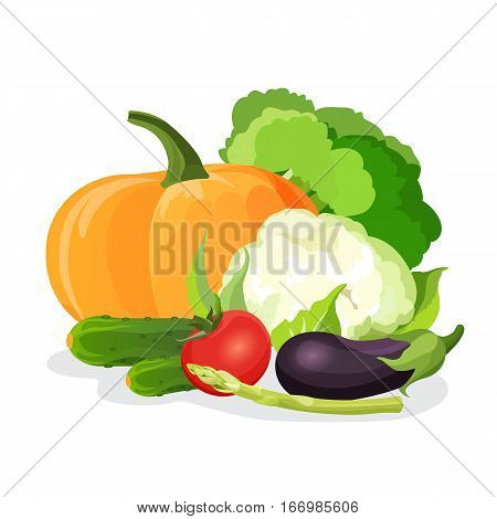 Set of vegetables isolated on white. Natural vitamins vegetarian food vector illustration. Purple eggplant, red tomato, green cabbage, tasty cucumber, delicious cauliflower, pumpkin and asparagus stem