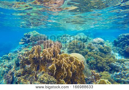 Underwater landscape with coral reef. Diverse corals and sea plants. Tropical aquatic flora photo. Low tide undersea landscape. Water surface reflections. Colorful exotic nature image for background
