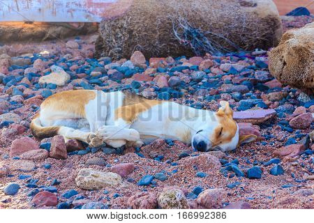 Dog sleeping on the beach. Dive site Grand canyon, Dahab.