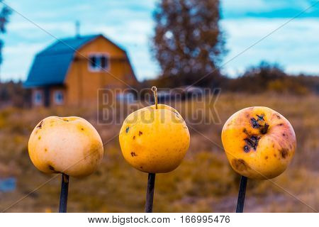 Three apples impaled on three sticks, in the background garden house.