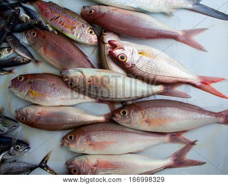 Red oceanic fishes on the market. Exotic sea fishes bunch close photo. Fresh fisherman catch for dinner. Fish for cooking. Red mackerel ingredient. Closeup fish meat