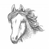 Horse head sketch of arabian mare horse. Isolated racehorse head with alert ears and long flowing mane. Horse racing, equestrian sporting competition, breeding farm design poster