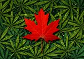 Canadian marijuana concept and Canada canabis law and legislation social issue as medical and recreational weed usage icon as a red maple leaf on a background of green pot symbols in a 3D illustration style. poster