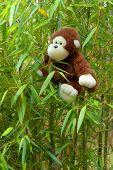 cute stuffed animal monkey swinging in bamboo poster