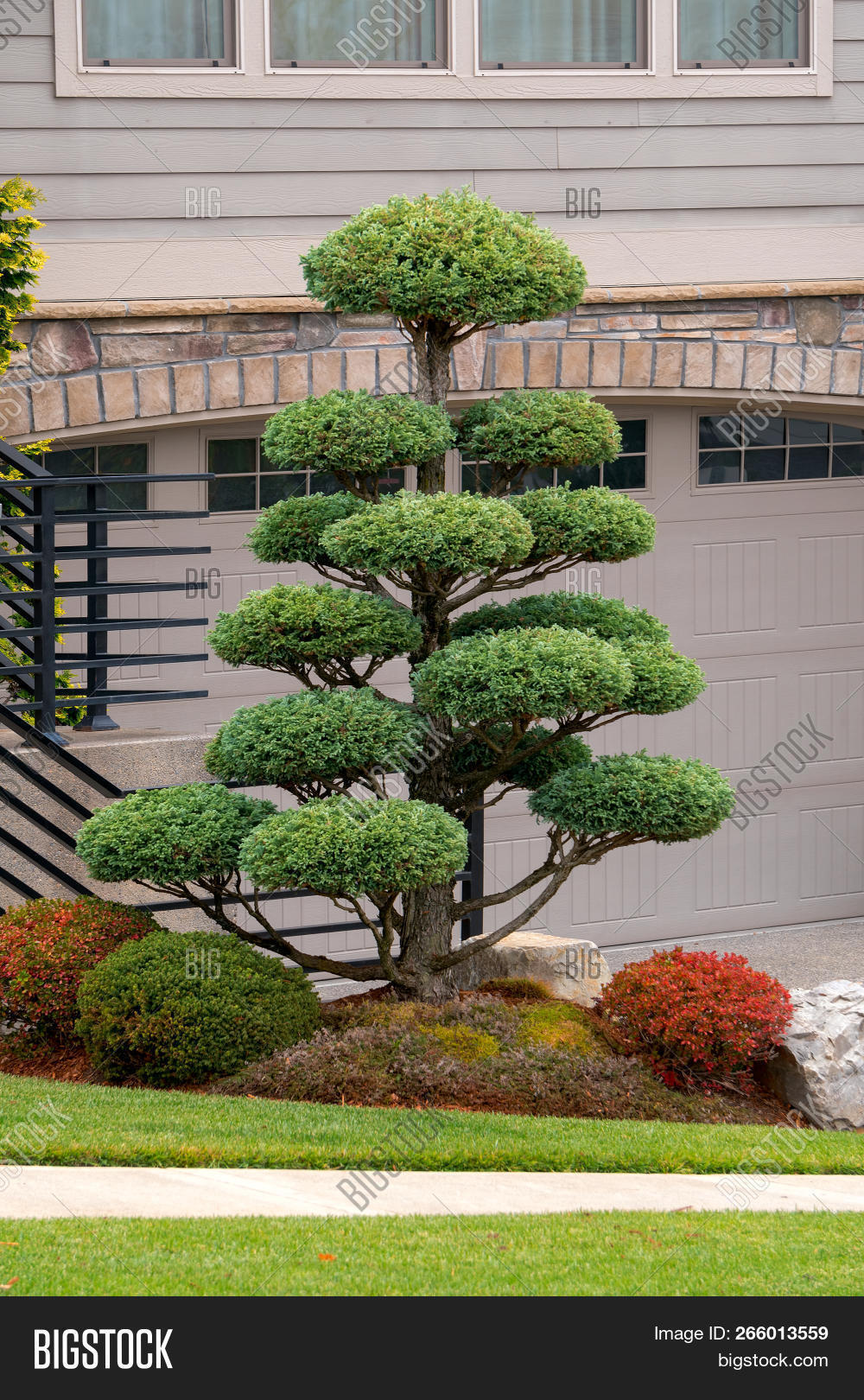 Topiary Tree Front Image Photo Free Trial Bigstock