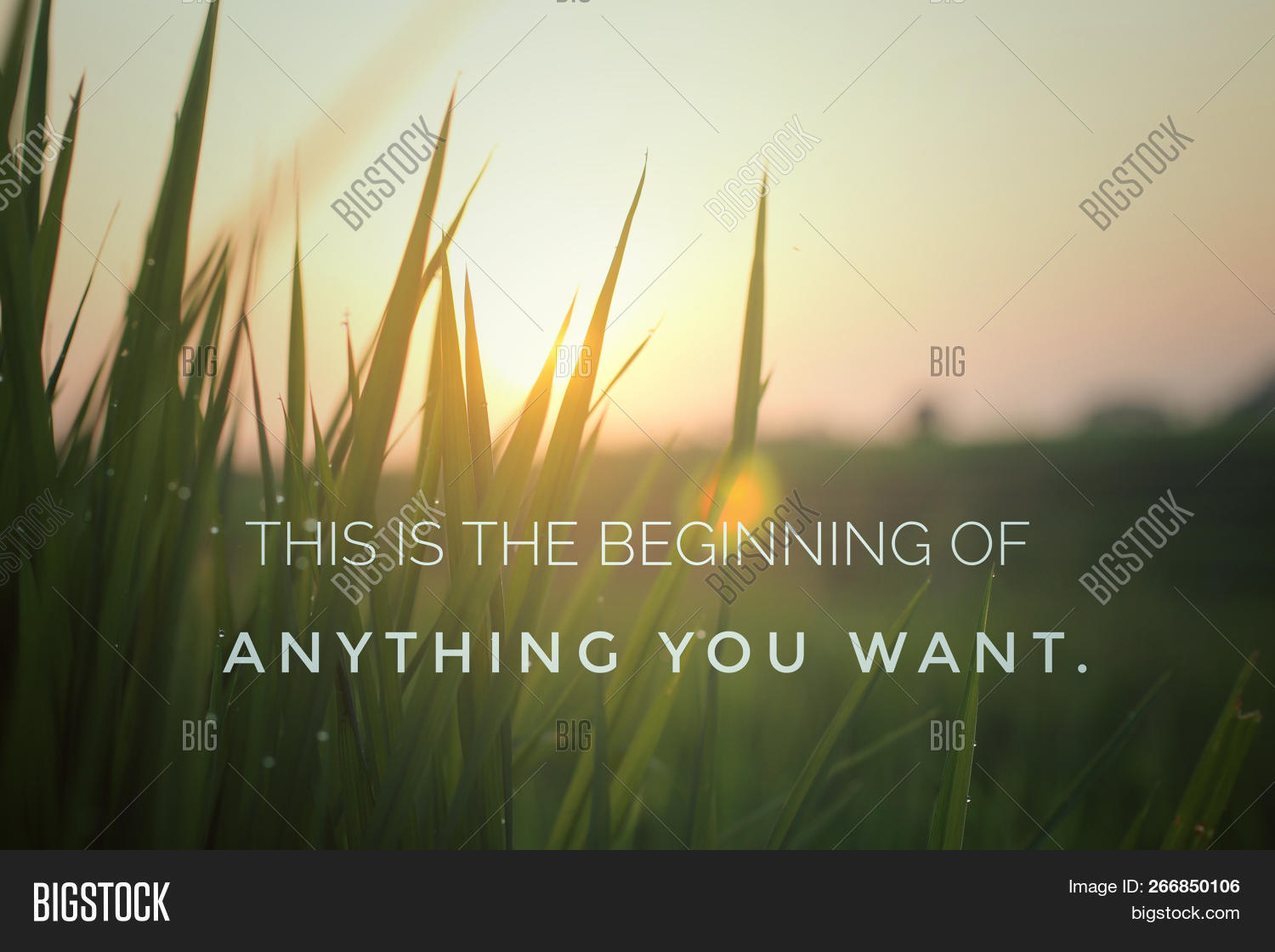 New Year New Day Image Photo Free Trial Bigstock