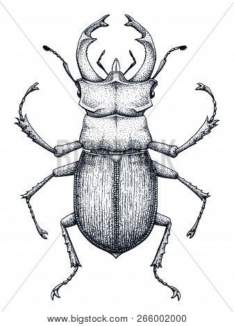 Stag Beetle Tattoo Art. Lucanus Cervus. Family Lucanidae.dot Work Tattoo. Insect. Symbol Of Authorit