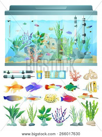 Aquarium With Fish And Decorative Algae And Coral Illustration. Water Cleaning System And Thermomete