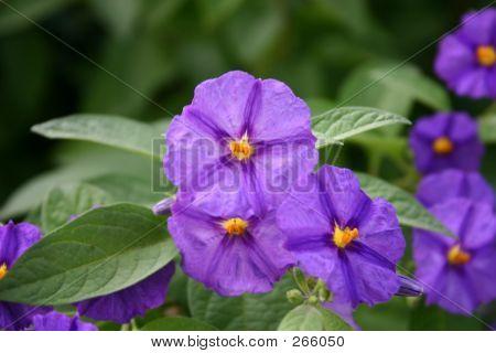Flower 1002 322