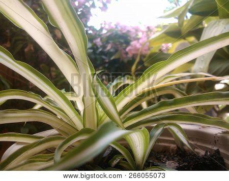 Foto De Planta Tomada En Jardin Con Flores De Fondo