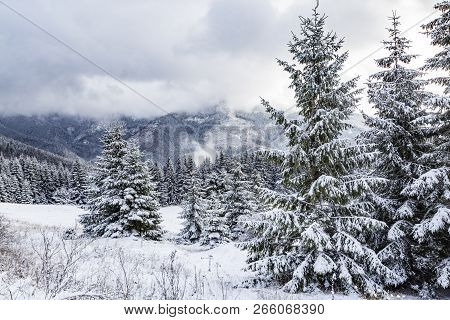 Winter Mountain Landscape: Snowy Firs  Against The Backdrop Of Misty Mountains. Snowy Misty Valley.