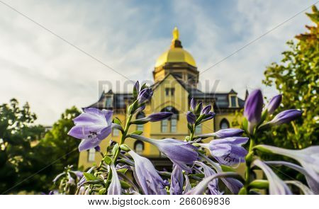 Golden Dome At The University Of Notre Dame In South Ben Indiana Blurred Through Fall Flowers