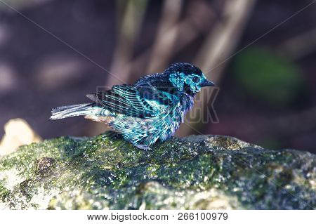 Bird, small cute animal with blue feathers sitting on stone on sunny summer day on blurred natural background. Wildlife and nature. Ornithology poster