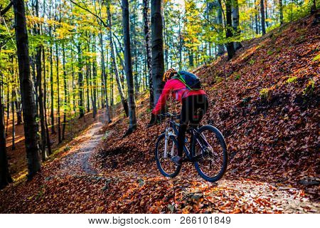 Cycling, mountain bikeing woman on cycle trail in autumn forest. Mountain biking in autumn landscape forest. Woman cycling MTB flow uphill trail.