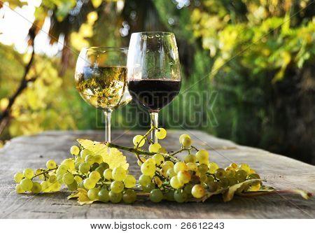 Coppia di bicchieri da vino e grappolo d'uva. Regione Lavaux, Svizzera