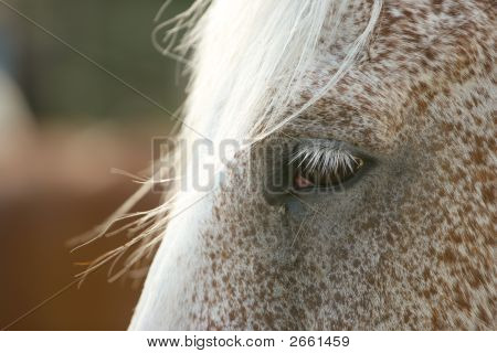 Equine Fringe Profile 2
