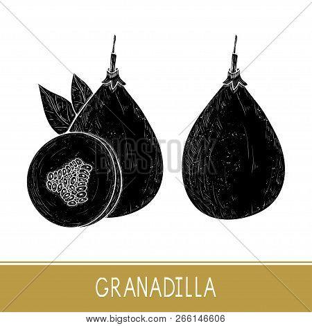 Granadilla. Fetus, Leaves. Black Silhouette On White Background.