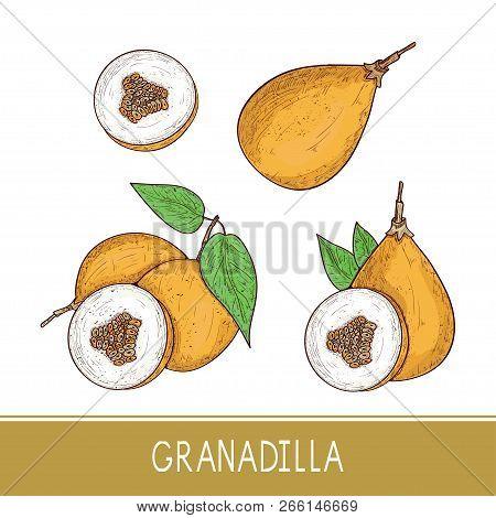 Granadilla. Fruit. Sketch. On A White Background. Color. Set