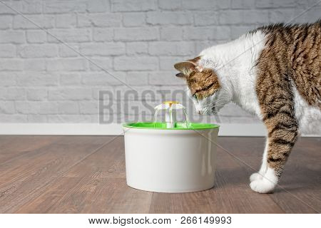 Thirsty tabby cat drinking water from a pet drinking fountain. Side view with copy space. poster
