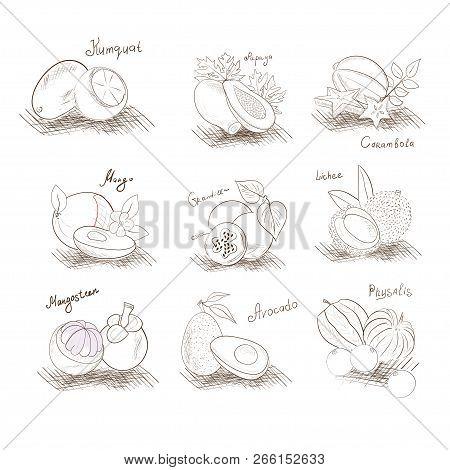 Set. Exotic Fruits. Sketch. Black And White Image. Papaya, Carambola, Kumquat, Mangosteen, Avocado,