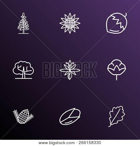 Ecology Icons Line Style Set With Hazel Nut, Sunflower, Larch Tree And Other Ecology Elements. Isola
