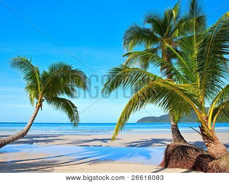 beautiful tropical scene