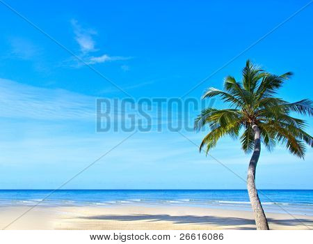 Single palm as flower  on the empty beach, blue water and  sky background