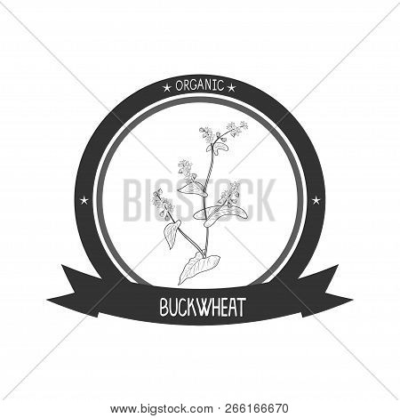 Buckwheat. Flower, Leaves And Stem. Sketch. Monophonic. Sticker, Emblem, Logo