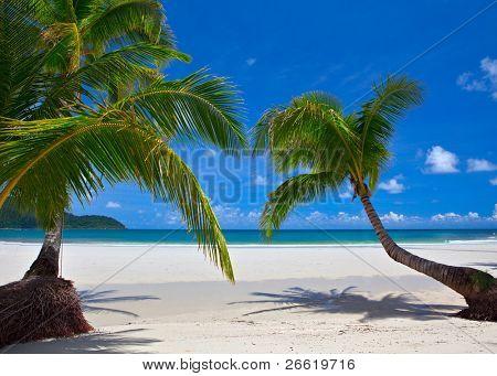 Palm trees on tropical beach near the sea. Paradise resort.