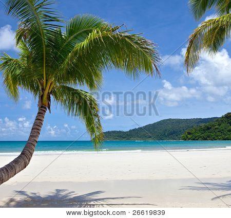 Tropical white sand virgin beach